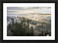 Fog and forest seen from Coxcomb Hill; Astoria, Oregon, United States of America Picture Frame print