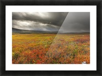 A storm passes over the bright colors of autumn in Denali National Park & Preserve, Alaska. Picture Frame print