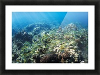 Tropical Reef in Hawaii- Picture Frame print