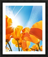 Field of Flowers with Blue Sky, Macro View Picture Frame print