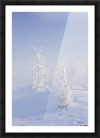 Scenic view of Birch trees in fog at sunrise, North Pole, Interior Alaska, Winter Picture Frame print