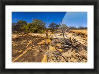 Kalbarri Canyon Picture Frame print