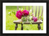 Fresh pink peonies picked and lying on a wooden chair; New Westminster, British Columbia, Canada Picture Frame print