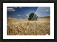 Lone tree in a wheat field; Palouse, Washington, United States of America Picture Frame print