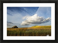 Wheat field and old wooden barn; Palouse, Washington, United States of America Picture Frame print