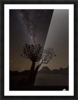 The milky way slashes across the night sky above a quiver tree (kokerboom, aloe dichotoma) in Richtersveld National Park; South Africa Picture Frame print