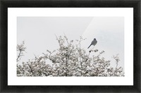 Bluebird in Snow 3VP Picture Frame print