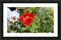 20161015_150155 Picture Frame print