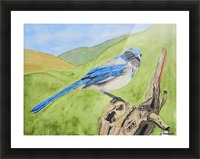 Blue Scrub Jay On Dead Tree Picture Frame print