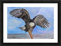 Majestic Eagle  Picture Frame print