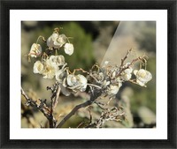 Weeds VP2 Picture Frame print