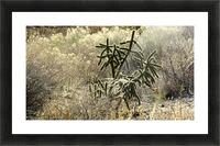 Shimmering  Cactus VP1 Picture Frame print