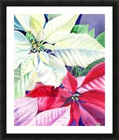 White Red Pink Poinsettia Picture Frame print