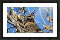 Golden Eagle VP3 Picture Frame print