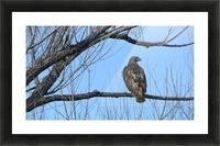 Golden Eagle VP4 Picture Frame print