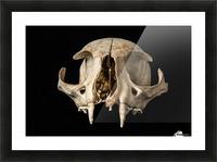 Bobcat Skull Picture Frame print
