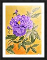 Purple Peony Picture Frame print