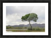 Tree at the Bosque de Apache Wildlife Sanctuary VP1 Picture Frame print