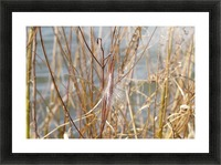Feather in Reeds at the Glenn VP3 Picture Frame print