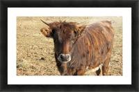 Bull in the Spring VP1 Picture Frame print