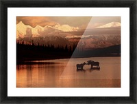 Moose Kissing Picture Frame print