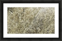 Wildflowers in the Sandia Mountains VP1 Picture Frame print