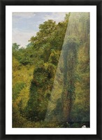 View of a forest in Jamaica Picture Frame print