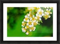 Springtime Picture Frame print