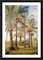 A street with dates trees Picture Frame print