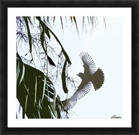 Orioles Abstract 2  Picture Frame print