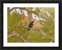 One Raven In Tree abstract 1 Picture Frame print