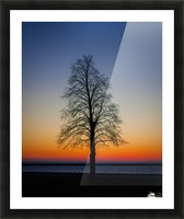 Trees IV Picture Frame print