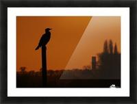 Cormorant perch Picture Frame print