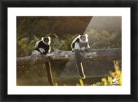 Lemur in his natural habitat, Madagascar Picture Frame print