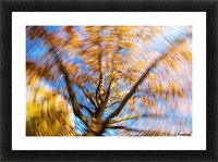 Autumn season in the middle of forest with colourful leaves Picture Frame print