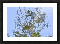 Two Blue Jays in Tree 2 abstract Picture Frame print