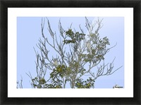 Two Blue Jays in Tree 1 abstract Picture Frame print