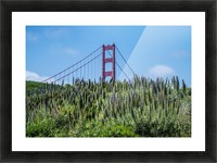 San Francisco Lupines Picture Frame print