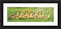 Get Your Geese in a Row Picture Frame print