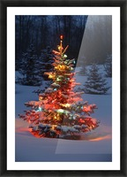 Christmas Tree With Lights Outdoors In The Forest Picture Frame print