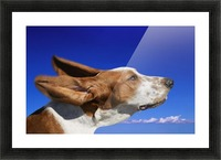 Dog With Ears In The Wind Picture Frame print