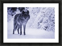Wolf Picture Frame print