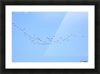 Flock of Geese 3  Picture Frame print
