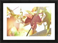 Leaves Macro 1  Picture Frame print