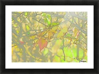 Leaves Macro 5 Abstract 1 Picture Frame print