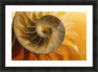 Inside Of Nautilus Shell Picture Frame print