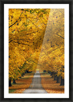 Trees In Autumn Picture Frame print