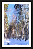 Winter. Forest. Shadow Picture Frame print