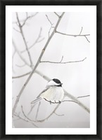 Bird On A Branch Picture Frame print