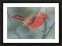 Cardinal Photo by Jason Andrew Smith Picture Frame print